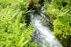 Brook flowing over there Royalty Free Stock Images