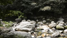 Brook flowing among stones stock footage