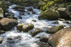 Brook flowing Royalty Free Stock Photo