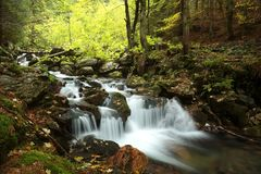 Free Brook Flowing Through An Autumn Deciduous Forest Stream From Stones Among Trees Covered With Colorful Leaves The Slope Of Mountain Royalty Free Stock Photography - 139632547