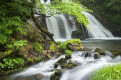 Brook flowing from waterfall. Brook flowing from Meisui waterfall and fresh green tree in Oita Royalty Free Stock Photo