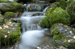 Brook in the forest Royalty Free Stock Photo