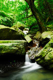 Brook of forest Royalty Free Stock Photos