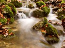 Brook in the forest. Rushing brook in the forest with some fall leaves in it Royalty Free Stock Photography