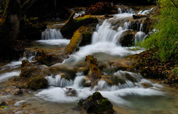 Brook of forest Stock Photography