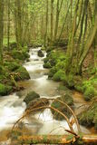 Brook in forest. Brook in the rainy day Stock Photos