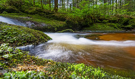 Brook in forest Stock Photos