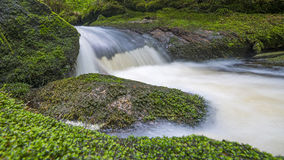 Brook in forest Stock Images