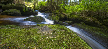 Brook in forest Royalty Free Stock Images