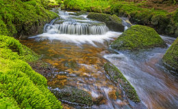 Brook in forest Royalty Free Stock Image