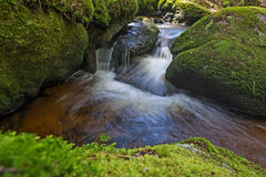 Brook in forest Royalty Free Stock Photography