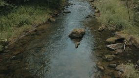 The brook in the forest stock footage