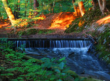 Brook in forest with waterfall. In setting sun light royalty free stock photography