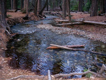 Brook in forest, Yosemite Valley Stock Photography