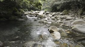 Brook gently flowing. After passing through among stones under laurel forest stock video