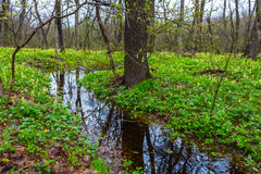 Brook in a green spring forest Stock Photography