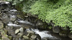 Brook and green trees. Brook flowing among stones along green trees stock footage