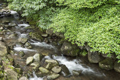Brook and green trees. Brook flowing among stones along green trees Royalty Free Stock Photos