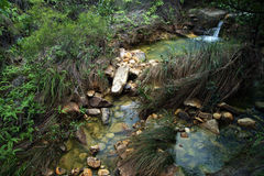 Brook in jungle. Still water in Hong Kong Geopark Stock Images