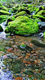 Brook. Mini waterfalls in brook Royalty Free Stock Photography