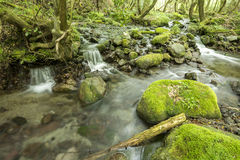 Brook and mossy stone Stock Images