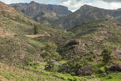 Brook in mountains landscape in Tejeda, Gran Canaria. Small brook in mountains landscape in Tejeda, Gran Canaria pine forest Royalty Free Stock Images