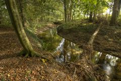 Brook in the Netherlands Stock Photography