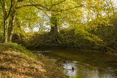 Brook in the Netherlands Royalty Free Stock Photo