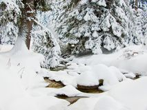 A brook and pine trees in winter Stock Image