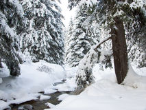 Brook and pine trees in winter Stock Photo