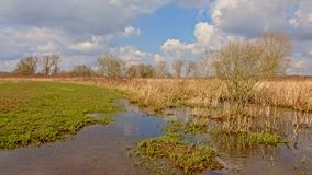 Brook with reed and bare shrubs under dark clouds. Brook with reed and bare winter shrubes under dark clouds at Gentbrugse Meersen nature reserve, Ghent Stock Photo