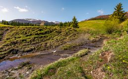 Brook among the slopes with spruce forest. Beautiful springtime landscape in mountains Stock Photos