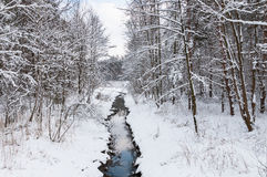 Brook in snowy forest Royalty Free Stock Photography