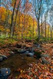 Brook among stones and foliage in forest. Beautiful autumn scenery on a bright day royalty free stock photo
