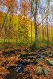 Brook among the trees. Fallen foliage among the rocks. beautiful autumn scenery stock image