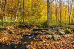 Brook among the trees. Fallen foliage among the rocks. beautiful autumn scenery stock photo