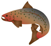 Brook Trout Color vector Illustration. Brook Trout Fish in Color vector Illustration Royalty Free Stock Image