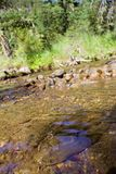 Brook Trout in Crystal Clear Waters. Trees and Rocks in Background stock photos