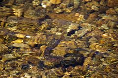 Brook Trout in Crystal Clear Waters stock photo