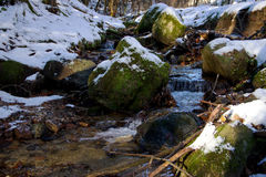 Brook Trout in Forest. Brook Trout in Winter Forest royalty free stock image