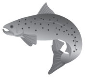 Brook Trout Grayscale Vector Illustration Stock Image