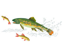 Brook trout  predator catch a fish Stock Image