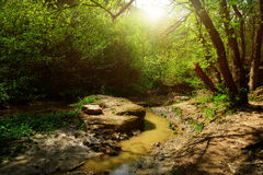 Brook in wood. Brook in the old forest Royalty Free Stock Photo