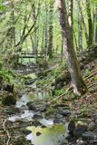 Brook in the woods. With a bridge Royalty Free Stock Photo