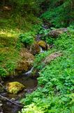 Brook in the woods. In Slovakian forests Royalty Free Stock Photo