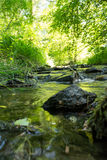 Brook in the woods. A stream in a forest in summer Stock Image