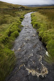 Brook in Yorkshire Dales Yorkshire England Stock Photography