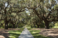 Brookgreen Gardens Path. A path along the Brookgreen gardens in South Carolina provides mystic and beauty Royalty Free Stock Image
