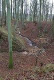 Brooklet в лесе Стоковое Изображение