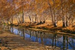 Brooklet com árvore Fotos de Stock Royalty Free
